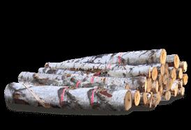 birke-rundholz